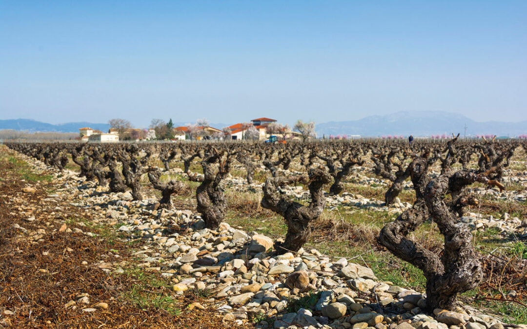 30 HECTARES OF SINGULAR – AND SINGLE – VINEYARD