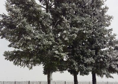 Terraza-nevada-en-Finca-La-Emperatriz-02