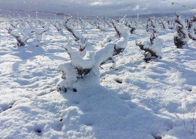 Vinedo-nevado-en-Finca-La-Emperatriz