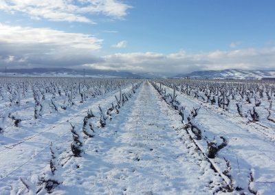 Vista-con-vinedo-nevado-en-Finca-La-Emperatriz